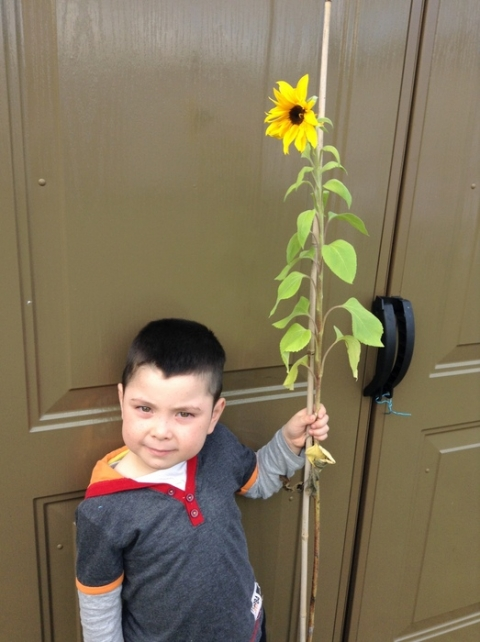 Faris and his sunflower