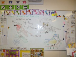 Blackboard with Robin,Blackbird and Blue Tit Drawings